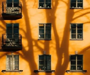 aesthetic, orange, and tree image