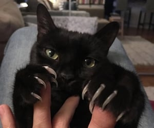 cat, animal, and claws image