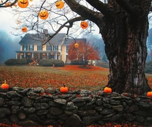 Halloween, autumn, and fall image