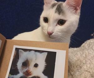 cat, happy, and photo image