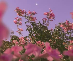 moon, nature, and pink image