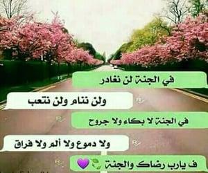 arab, جَنَة, and الله image