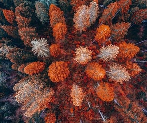 above, fall, and nature image