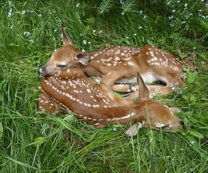 bambi, deer, and nature image