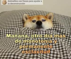 edit, meme, and perrito image