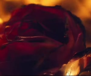 fire, flames, and flower image