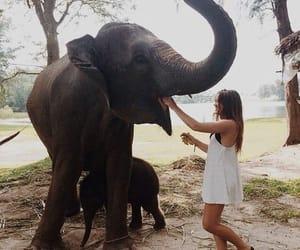 elephant, girl, and animal image