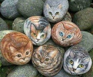 кошки image