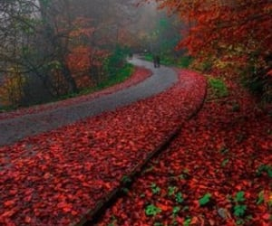 autumn, colors, and red image