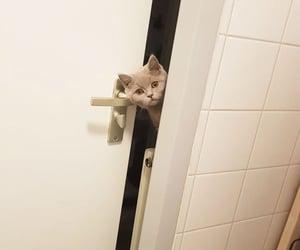 Peek-a-Boo!🐈