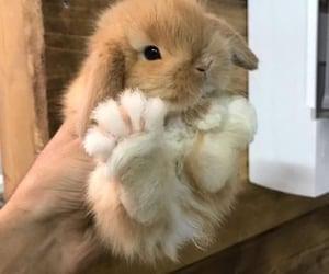 animals, pets, and rabbit image
