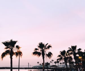 landscape, palm trees, and sunset image