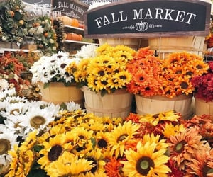 flowers, autumn, and fall image