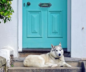 animals, blue, and dogs image