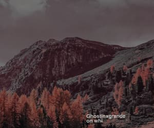 banner, ariana grande, and forest image