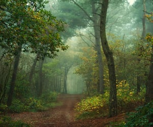 damp, forest, and greenery image