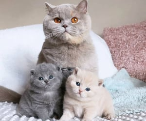cat, animals, and pets image