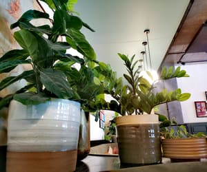 calm, decor, and plants image