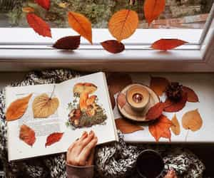 autumn, candle, and autumnal image