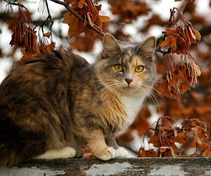 cat, kitty, and autumn image