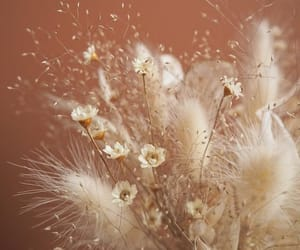 autumn, dry, and fluffy image