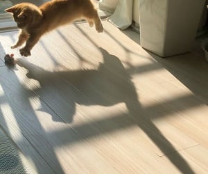 cat, light, and sun image