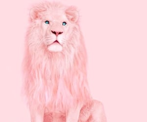 pink, lion, and animal image