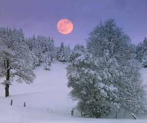 winter, moon, and snow image