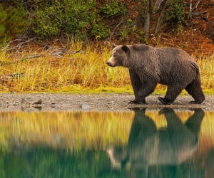 Grizzly by David Hemmings