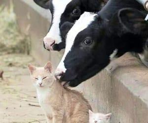 love friendship image