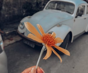 cars, flowers, and fusca image
