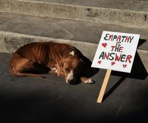 animal, dog, and empathy image