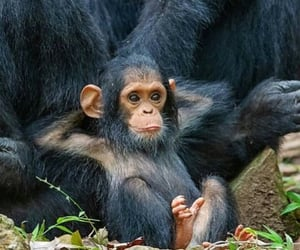 animals, monkey, and chill image