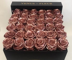 aesthetic, roses, and flowers image