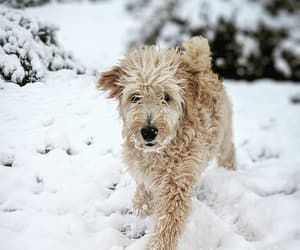 animals, dogs, and snow image