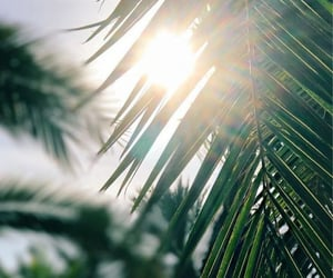 green, sun, and wallpaper image