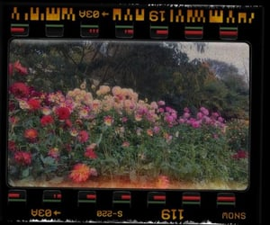 blumen, colors, and flowers image