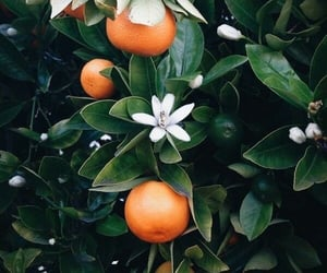 orange, fruit, and green image