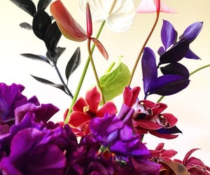 floral, florals, and flowers image