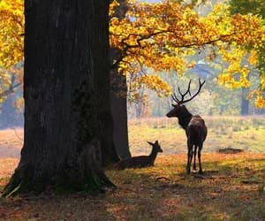 aesthetic, animals, and autumn image