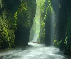 aesthetic, green, and rainforest image