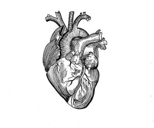 anatomical heart, art, and drawing image