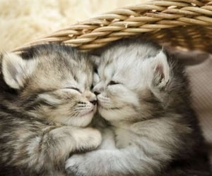 cats, kitten, and cute animals image