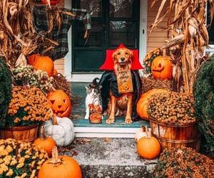 autumn, Halloween, and cat image