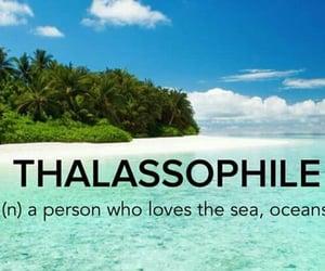 beach, love the sea, and sea life image