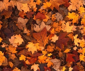 article, autumn, and inspiration image