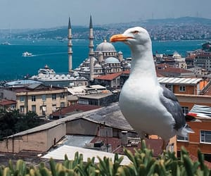 istanbul and seagull image