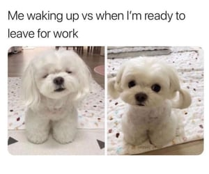 dog, funny, and memes image