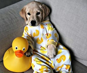 dog, baby, and duck image