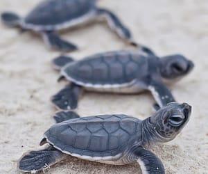 animal, animals, and turtle image